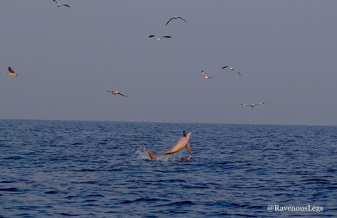 Dolphin spotting at Dapoli beach
