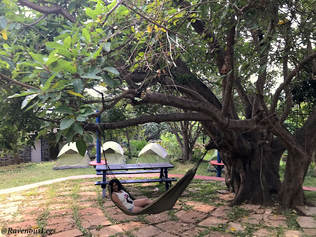 Camping in the garden at Native Place, Kamshet