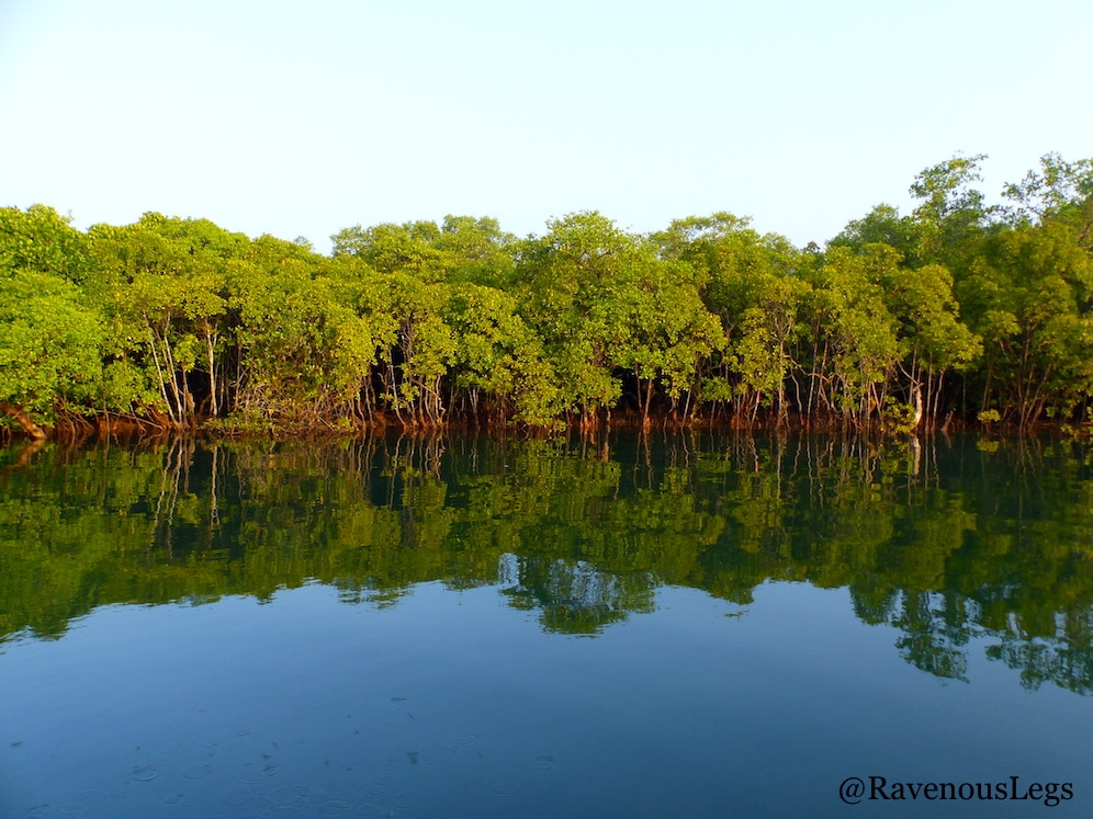 Mangroves on Mandovi river at Chorao Island