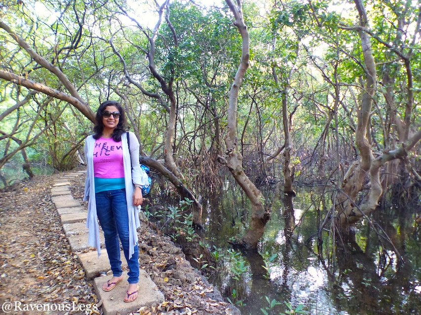 Walking through the mangroves at Salim Ali Bird Sanctuary on Chorao Islands